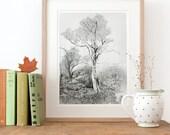 Tree drawing, Fine Art Print, woodland decor, beautiful pencil illustration forest, fall art tree print tree image tree picture, black white