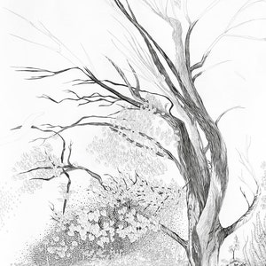 Tree Postcard detailed pencil illustration of forest nordic black and white postcrossing art postcard new woodland card nature artwork