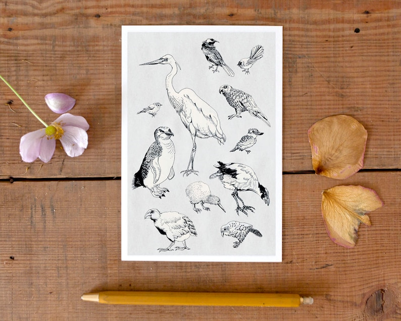 Postcard Birds of New Zealand pretty illustrated postcard image 0