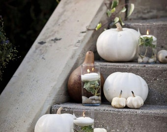 c2ed85c7ff054e White Pumpkin Collection of Seeds