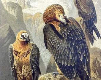Turkey Vulture Embroidered Cotton Cap NEW Hat Bird Buzzard Ornithology