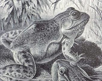 1922 Reptiles Amphibians Original Antique Chromolithograph Print by Alfred Brehm GECKO MADAGASCAR Home /& Living.