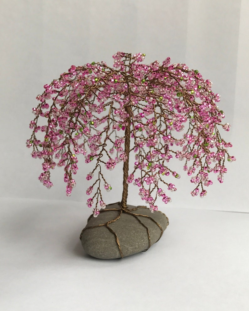 Weeping Cherry Tree Bonsai Bonsai Tree