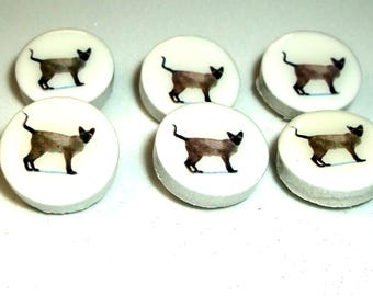 Siamese Cat Thumbtacks, Cat Themed Gift, Office Supplies, Thank You Gift, Pushpin, Stocking Stuffer, Cat Lover, Gift under 10