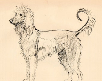 """1938 Vintage DOG PRINT from a book of Sketches by K.F. Barker """"Afghan Hound"""""""