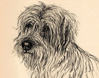 """1938 Vintage DOG PRINT from a book of Sketches by K.F. Barker """"Gypsy, a Schnauzer"""""""