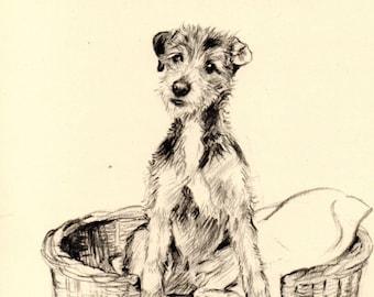 1933 Funny Vintage DOG PRINT Original Pen & Pencil Sketch by K.F. Barker
