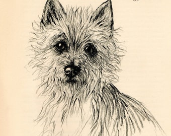 """1938 Vintage DOG PRINT from a book of Sketches by K.F. Barker """"The gay little Cairn!"""""""