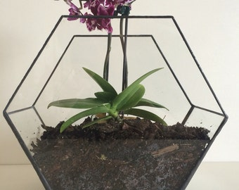 Art Deco style glass terrarium, wedding decoration, candle holder, geometric planter glass hexagon planter, Mother's Day gift, orchid pot