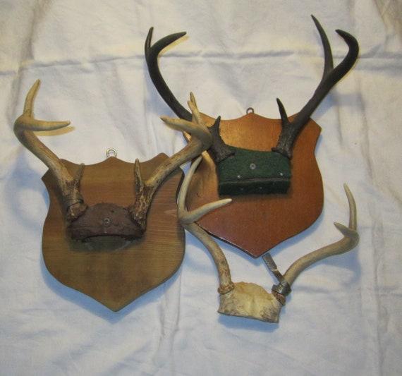 Lot Of 3 Deer Antlers Two Wood Shield Mounts Plus Metal Etsy
