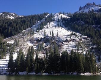 Colorado Trees Digital Download