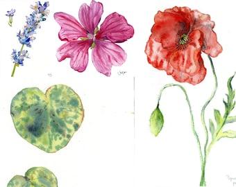 5 FLOWERS POSTCARDS Happy Birthday Cards Boyfriend Card Cute Different Flowers Peony Poppylavender