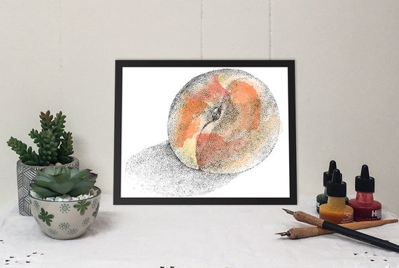 11x 14 Matted Print of a Ripe Nectarine in brilliant color and black and white ink drawing.