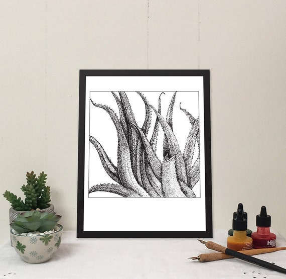 11x14 matted print of Spiky Aloe stippled pen & ink drawing