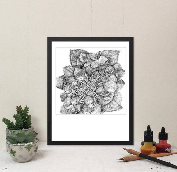 11x14 matted print of a Japanese Hydrangea Blossom stippled pen & ink drawing