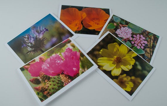 "5""x7"" photo greeting cards series of Desert Wildflowers"