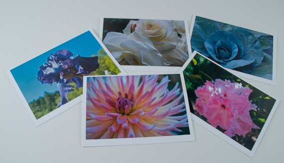 "5""x7"" photo greeting cards series of garden flowers"