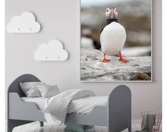 Puffin photography print, Bird photography print, Puffin prints, Nature photography, Bird Photography, Puffin wall decor, Seabird prints