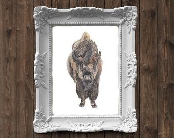 American Bison Buffalo Watercolor Painting - art print