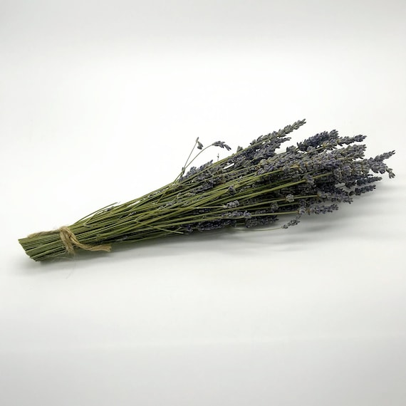 Mini Natural Dried LAVENDER French Provence Bunch Fragrant Tied Stems UK Scent A