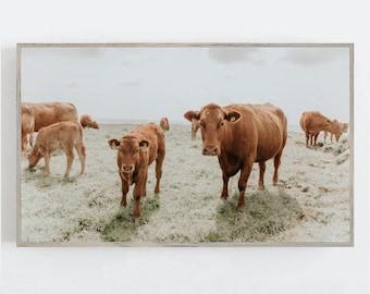Samsung Frame TV Art, Cows Farmhouse Wall Art, Frame TV Art, Cow Wall Decor, Modern Farmhouse Wall Art, Digital DOWNLOAD, Digital Art Tv
