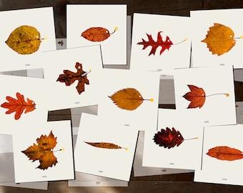 "fish Art Cards - leafish - Set of 12 postcards - Illustration postcard 14,8cm x 14,8cm (5,8"" x 5,8"")"