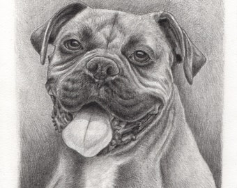 Handmade Custom Pet Portrait Drawing of a Boxer Dog, Pencil on Paper by Green Blanket Portrait