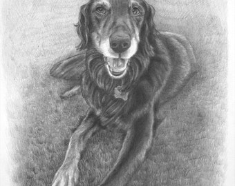 Handmade Custom Pet Portrait Drawing of a Dog, Pencil on Paper by Green Blanket Portrait