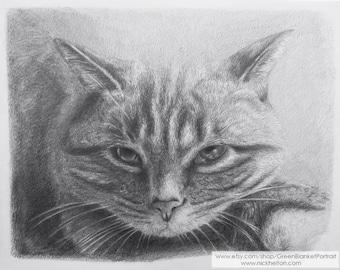 Handmade Custom Pet Portrait Drawing of a Cat in Pencil on Paper by Green Blanket Portrait