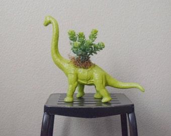 Brachiosaurus Dinosaur Toy Planter with Faux Succulent
