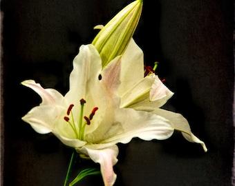 Lillies