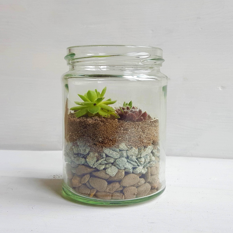 D.I.Y Terrarium Kit / Sempervivum / Succulent Glass Jar Favours ...
