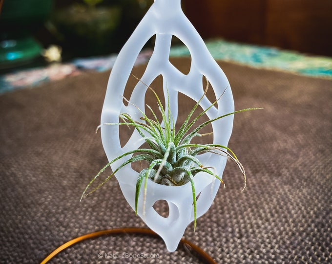 Featured listing image: Networked Glass Air Plant Ornaments, handmade glass and living plants
