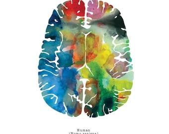 "Axial Human Brain Art Print - Colorful 8.5"" x 8.5"" Psychiatry Artwork - Colorful Neuroscience, Neurology, and Psychology Gifts by J. Sayuri"