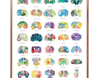 """16"""" x 20"""" Animal Brain Art Poster - SECOND EDITION PRINT - Colorful and Thoughtful Neurology, Neuroscience, Psychiatry, Psychology Artwork"""