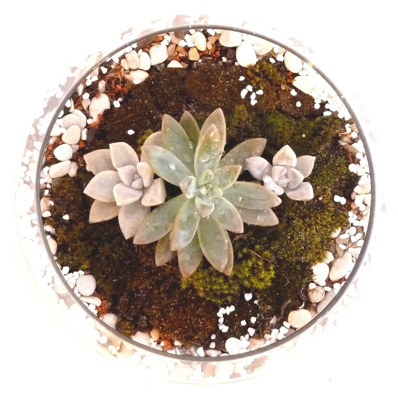 Handmade Succulent Terrarium Party Decoration Small Room Etsy