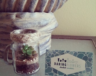 Mason jar terrarium decorated with macrame / Succulents / Great gifts and giveaways / Great decor parties, weddings, small areas and desks.