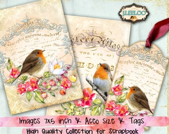 Sweet Robin Bird On Branch Postcard Gift or Scrapbook Tags or Magnet #458