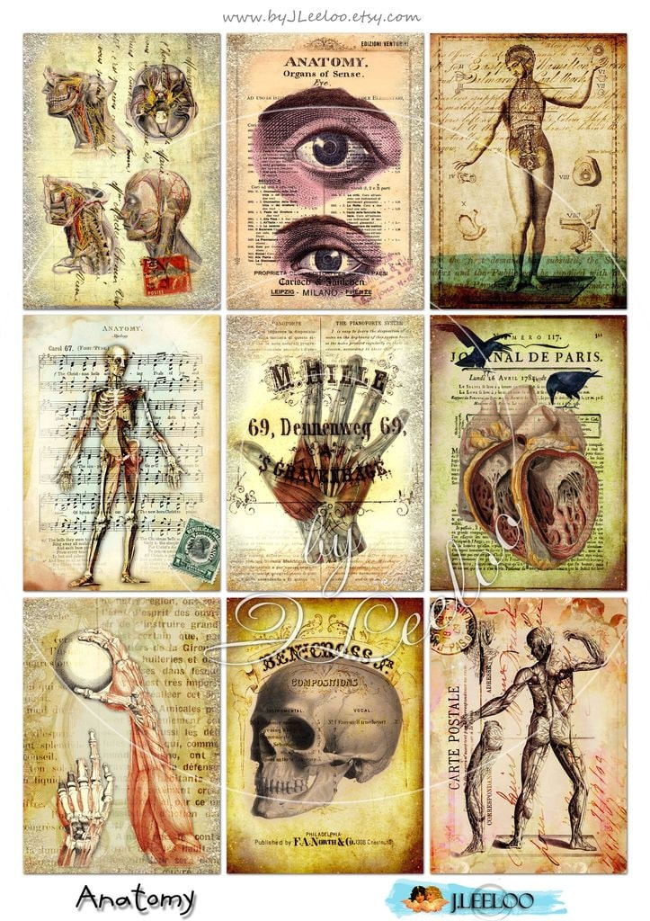 Huesos del cráneo para imprimir de anatomía antiguos libro atc | Etsy