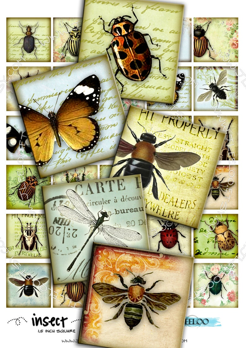 Digital paper INSECT 1.5 inch square butterfly ladybug coleoptera beetles for magnet stickers pendant instant download printable qu265