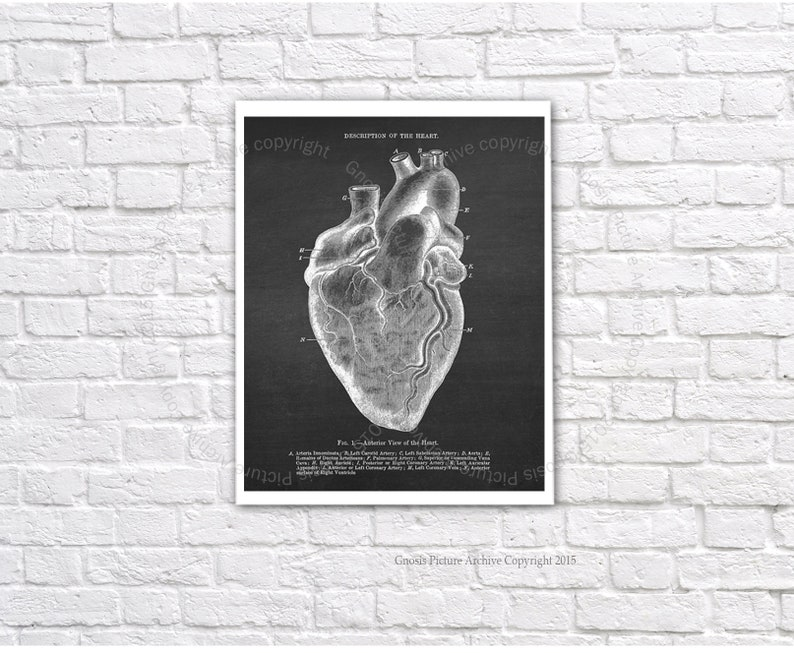 Anatomy Heart Art Prints Set of 3 unframed wall art