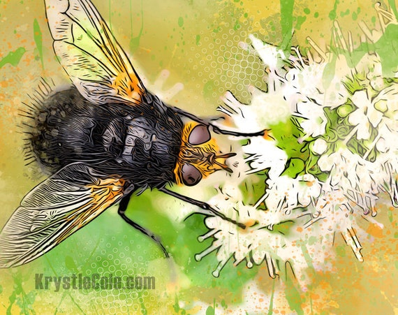 Fly on a Flower Print