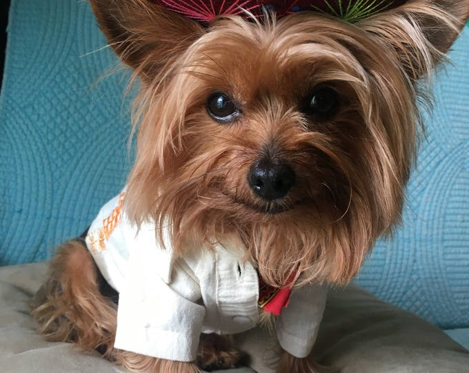Mexican Dog Costumes for CINCO DE MAYO/ Dog Boy Mexican Costume / Mexican Halloween Costumes / Mexican Costumes for dogs
