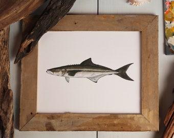 COBIA, LEMONFISH, LING, Fish Art Painting, Saltwater Fishing, Ocean Art, Deep Sea Fishing, art print
