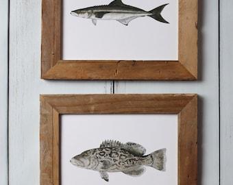 Saltwater Fish Art Prints - 2 PRINTS, Cobia, Grouper -  Fish Painting, Ocean Art, Deep Sea Fishing, art print