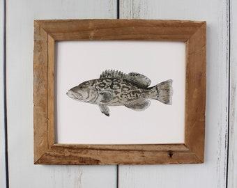 GAG GROUPER, Fish Art Painting, Saltwater Fishing, Ocean Art, 8x10, 11x14, art print