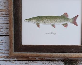 Muskellunge, Musky, Muskie Fishing, Freshwater Fish, Lake, Fisherman, Father's Day, Art Painting, Print , 8x10, 11x14