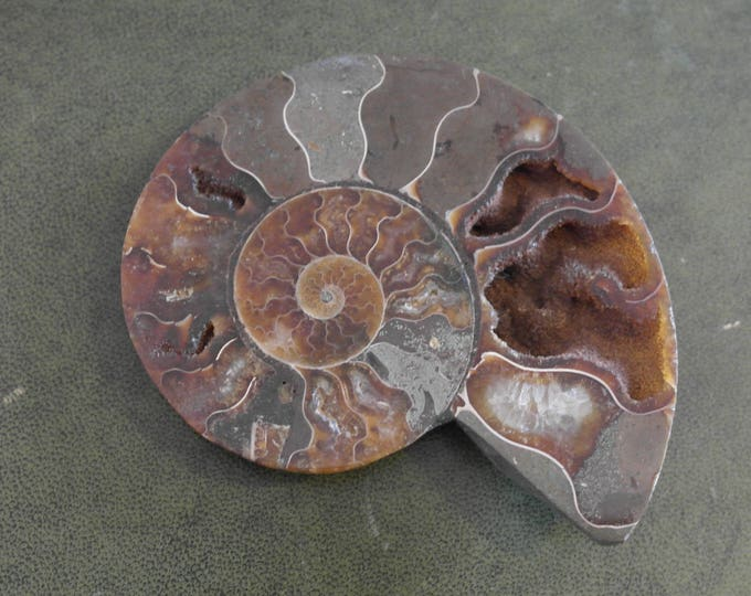 "Natural Ammonite Fossil Specimen, 4"" x 3 1/4"""