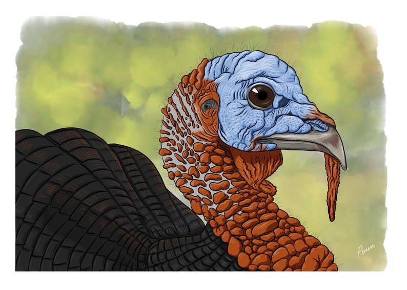 Thanksgiving Turkey image 1