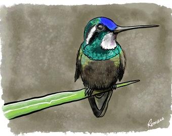 "Hummingbird, Digital Watercolor, 8"" X 10"". Hand-signed by artist."
